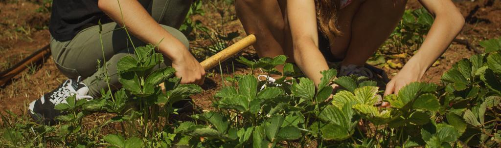 Nenes treballen l'hort dins de l'activitat educativa de L'Ortiga