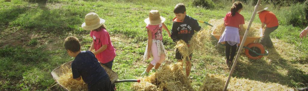 Infants aprenen de manera pràctica i divertida el cicle del pa