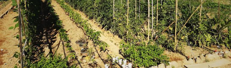formacions-ortiga-taller-introduccio-agricultura