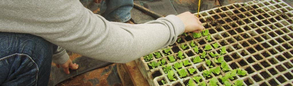 Participant d'un dels tallers de L'Ortiga manipulant un planter