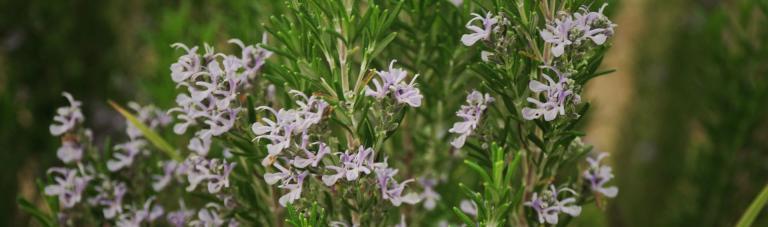 formacions-ortiga-taller-plantes-medicinals