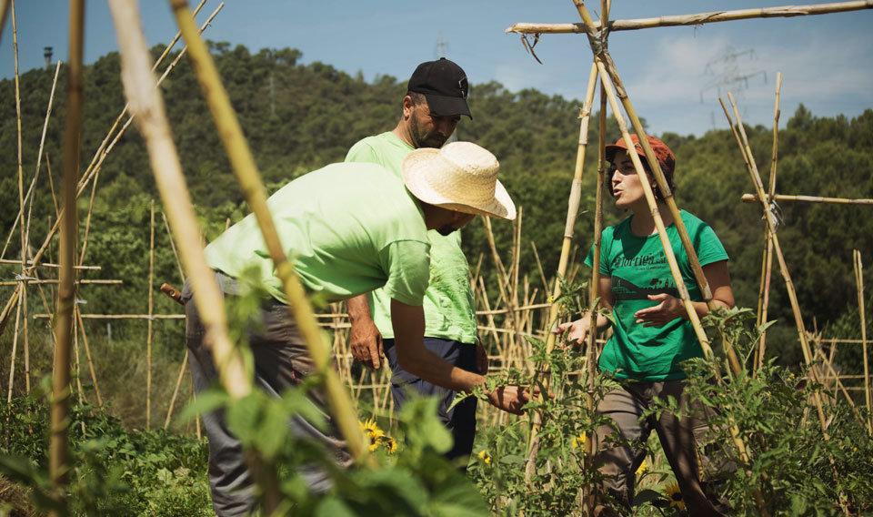 Agroecologia i cooperativisme a L'Ortiga