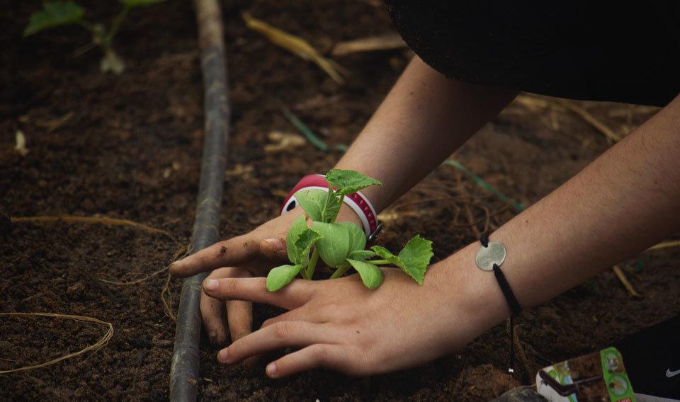 Nena aprenent agroecologia plantant una verdura en un dels horts escolars assessorats o dinamitzats per L'Ortiga