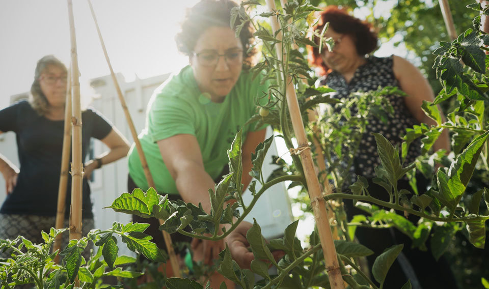 Classes bàsiques d'agricultura ecològica en busca de la sobirania alimentària, en un taller pràctic de L'Ortiga