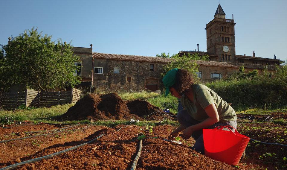 Participant d'un dels horts socials de L'Ortiga en el procès de plantar esqueixos.
